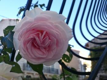 jardin maison d'hôtes Montpellier